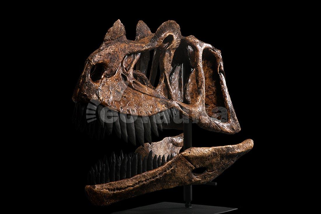 1100 x 733 jpeg 95kBTyrannosaurus