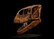 Turiasaurus- 2