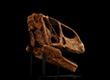 Turiasaurus- 3