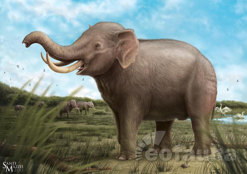 hyaenodon-horridus